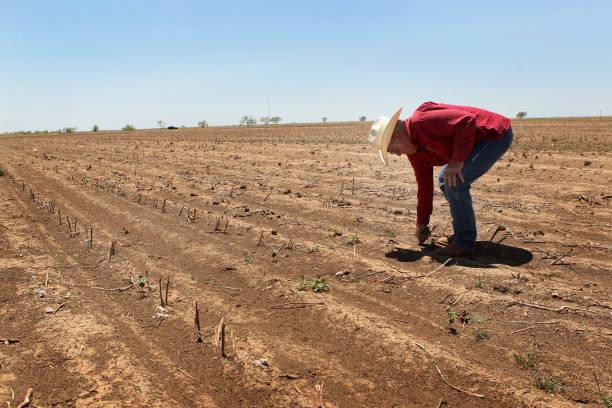 Farmers, Ranchers Struggle As Texas Endures Historic Drought:ニュース(壁紙.com)