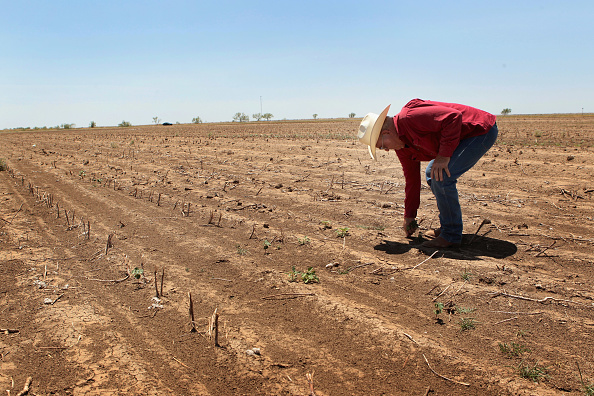Farm「Farmers, Ranchers Struggle As Texas Endures Historic Drought」:写真・画像(17)[壁紙.com]