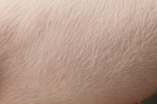 動物の毛「豚の肌」:スマホ壁紙(15)
