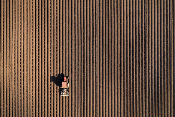 Agriculture「Agricultural Work Continues Amid Coronavirus Lockdowns」:写真・画像(14)[壁紙.com]