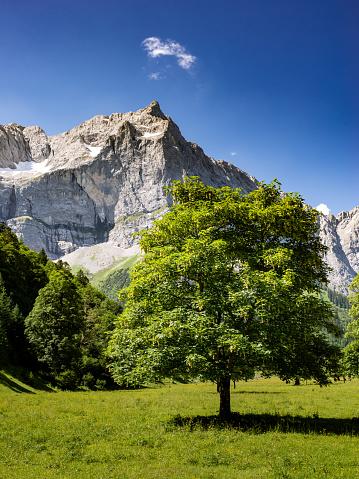 セイヨウカジカエデ「オーストリアのカーヴェンデル山範囲、メープル ツリー」:スマホ壁紙(5)