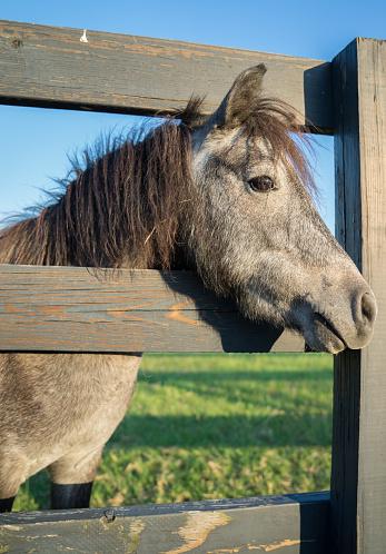 馬「Horse looking through a wooden fence」:スマホ壁紙(19)