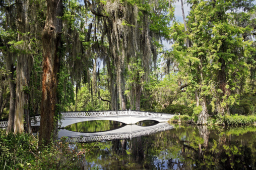Charleston - South Carolina「Charleston Magnolia Plantation White Bridge」:スマホ壁紙(13)