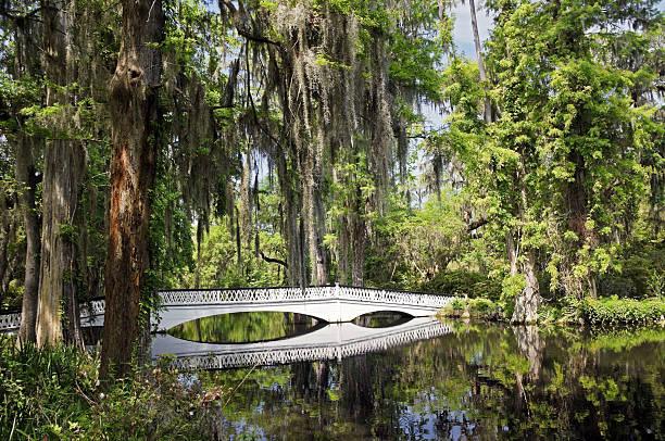 Charleston Magnolia Plantation White Bridge:スマホ壁紙(壁紙.com)