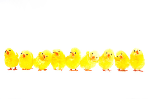 Chicken - Bird「Easter chicks isolated on white」:スマホ壁紙(10)
