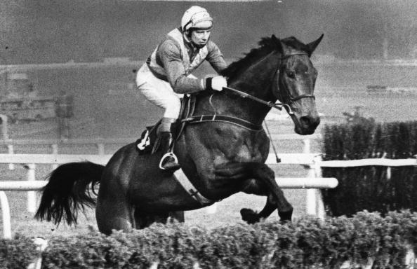 Horse Racing「Night Nurse」:写真・画像(10)[壁紙.com]