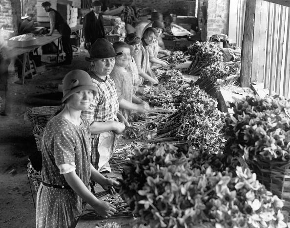Table「Daffodil Harvest」:写真・画像(11)[壁紙.com]