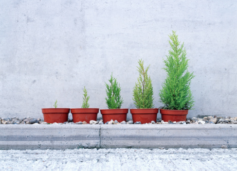 Sapling「Potted conifers in size order」:スマホ壁紙(4)