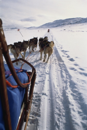 Dogsledding「Team of huskies pulling sledge, rear view, Lapland, Sweden」:スマホ壁紙(6)
