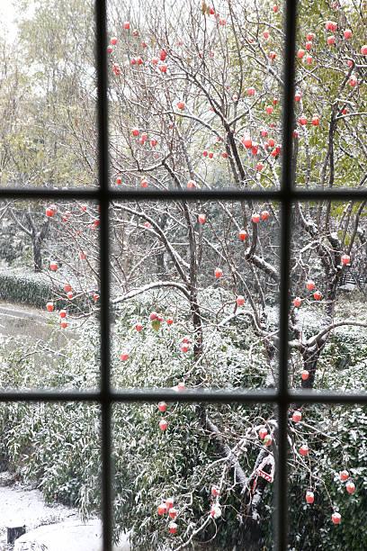 Persimmon tree in the courtyard:スマホ壁紙(壁紙.com)