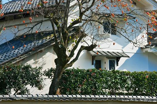 Persimmon Tree「Persimmon Tree and Kura Storehouse in the Iwakura District of Kyoto, Japan」:スマホ壁紙(9)