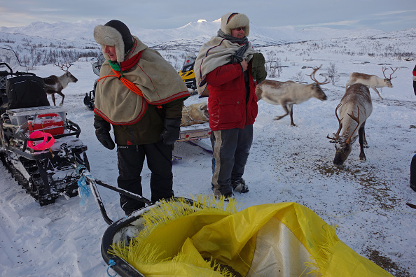 Animal Body Part「Sami Reindeer Herding」:写真・画像(14)[壁紙.com]