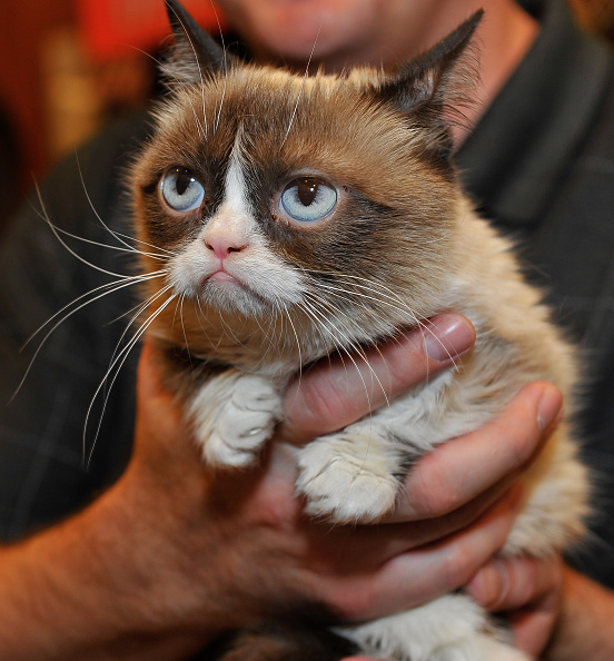 猫「Lifetime's Grumpy Cat's Worst Christmas Ever」:写真・画像(17)[壁紙.com]