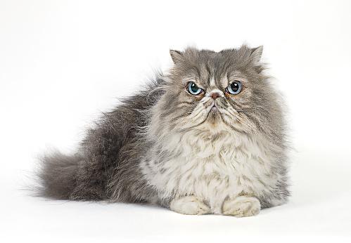 Mischief「Grumpy Cat」:スマホ壁紙(12)