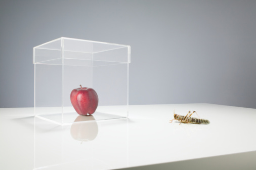 Threats「Locust looking at apple in transparent box」:スマホ壁紙(18)