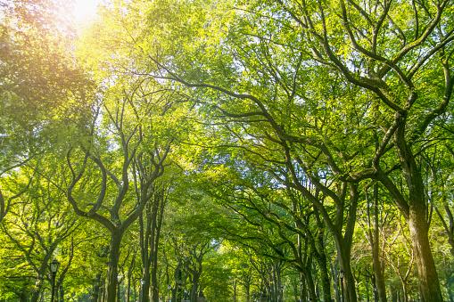 マンハッタン セントラルパーク「Green treetops in park」:スマホ壁紙(9)