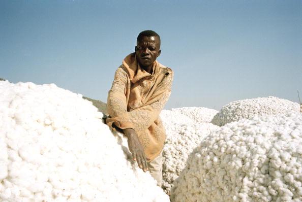 Environmental Conservation「Exxon Mobil's Chad / Cameroon oil pipeline」:写真・画像(5)[壁紙.com]