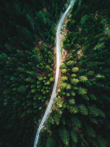 Pinaceae「forest aerial view in switzerland」:スマホ壁紙(16)