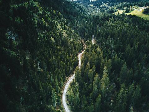 Dirt Road「forest aerial view in switzerland」:スマホ壁紙(11)