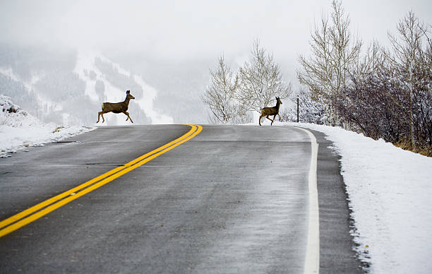 Deer Crossing Road:スマホ壁紙(壁紙.com)