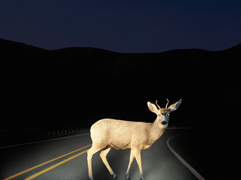 Uncertainty「Deer crossing road caught in headlights」:スマホ壁紙(8)