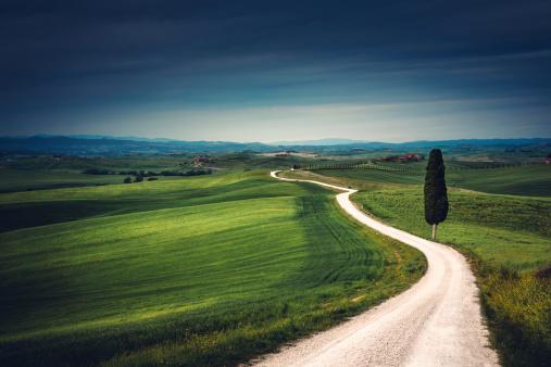 Single Tree「Tuscany Road」:スマホ壁紙(12)