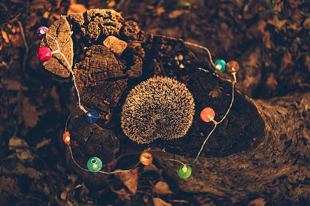 Sleeping hedgehog lying on dead wood in a forest:スマホ壁紙(壁紙.com)