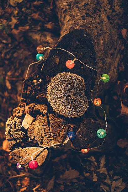 Sleeping hedgehog lying on dead wood in a forest:スマホ壁紙(壁紙.com)