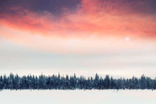 Sunlight above winter fir trees in lapland, Finland.:スマホ壁紙(壁紙.com)