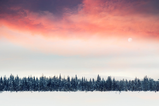 Dawn「Sunlight above winter fir trees in lapland, Finland.」:スマホ壁紙(9)