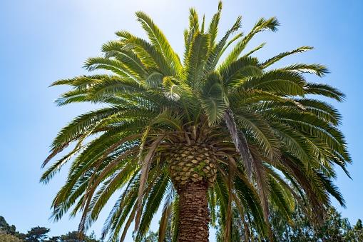 ヤシ「Palm Tree」:スマホ壁紙(2)