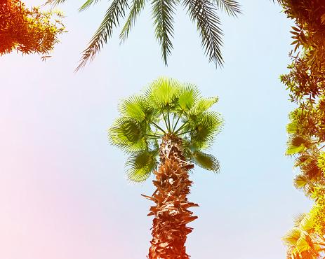 Morocco「Palm tree」:スマホ壁紙(13)