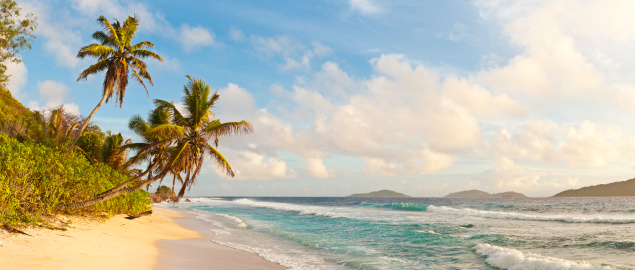 Island「Palm tree paradise deserted golden beach tropical island ocean Seychelles」:スマホ壁紙(14)