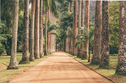 Botanical Garden「Palm Tree Path」:スマホ壁紙(3)