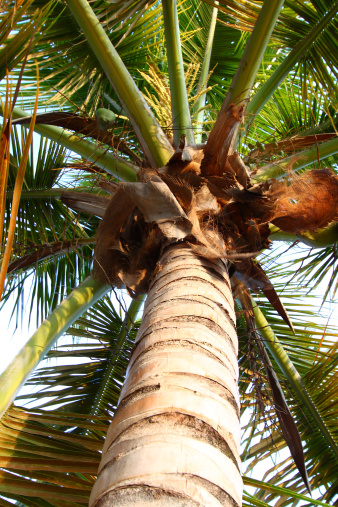 Frond「Palm Tree - Puerto Rico」:スマホ壁紙(9)