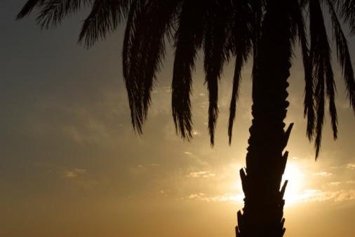 Frond「Palm tree」:スマホ壁紙(18)