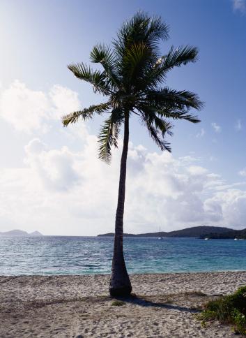 ヤシの木「Palm Tree」:スマホ壁紙(16)
