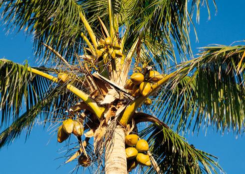 Northern Mariana Islands「Palm Tree」:スマホ壁紙(18)