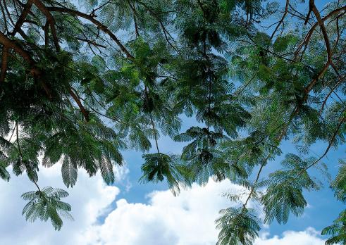 Northern Mariana Islands「Palm Tree」:スマホ壁紙(3)