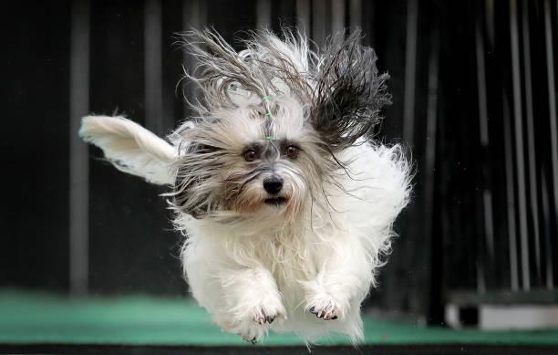 Melbourne Dog Lovers Enjoy 'Common Woof Games':ニュース(壁紙.com)