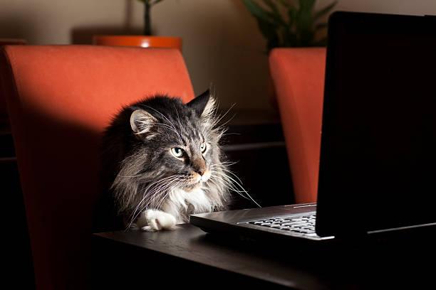 Cat With Laptop:スマホ壁紙(壁紙.com)
