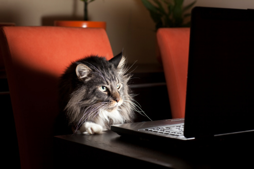 Animal Themes「Cat With Laptop」:スマホ壁紙(2)