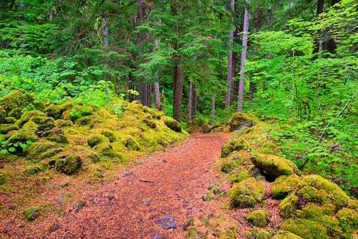 ウィラメット国有林「Trail To Proxy Falls In Willamette National Forest; Oregon United States Of America」:スマホ壁紙(18)
