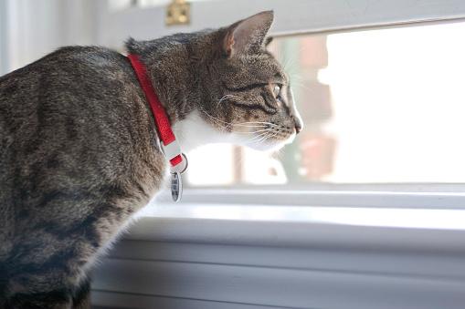 Cat「Indoor Cat with Collar」:スマホ壁紙(9)