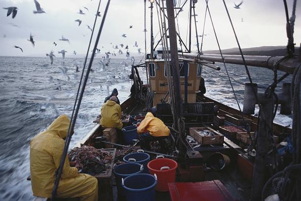 UK「Tarbert Fishing」:写真・画像(19)[壁紙.com]