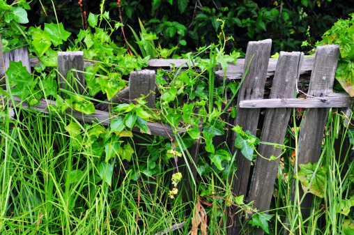 Picket Line「Weathered fence」:スマホ壁紙(5)