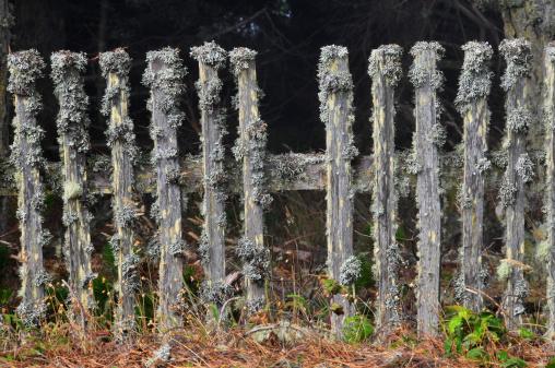 Picket Line「Weathered fence」:スマホ壁紙(2)