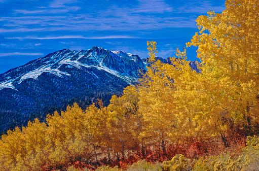 インヨー国有林「Aspens in fall color near Tioga Pass Yosemite NP(P)」:スマホ壁紙(15)