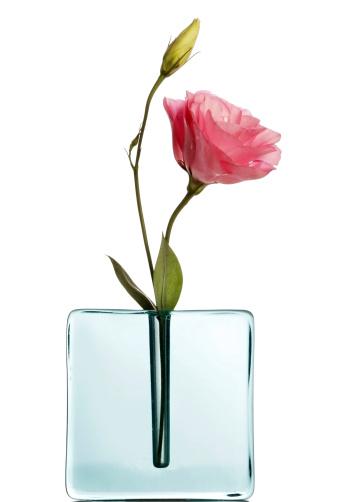 Single Flower「Pink lisiantus in blue vase on white」:スマホ壁紙(11)