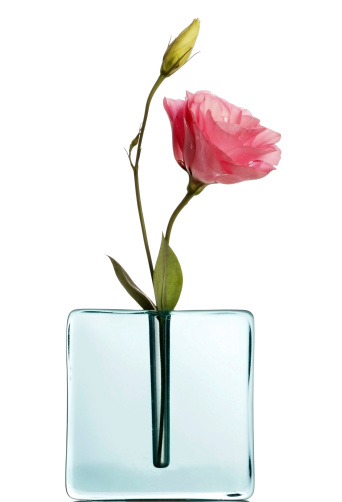 Rectangle「Pink lisiantus in blue vase on white」:スマホ壁紙(1)